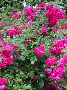 Blooming Arts Garden Walk & Art Auction